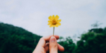 Hand holding a yellow daisy