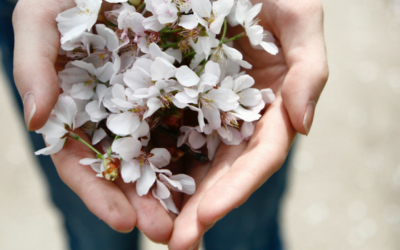hands holding blooming spring flowers